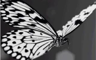 The Flight of White Butterfly Exhibit is a captivating winter adventure for people with hearing loss.
