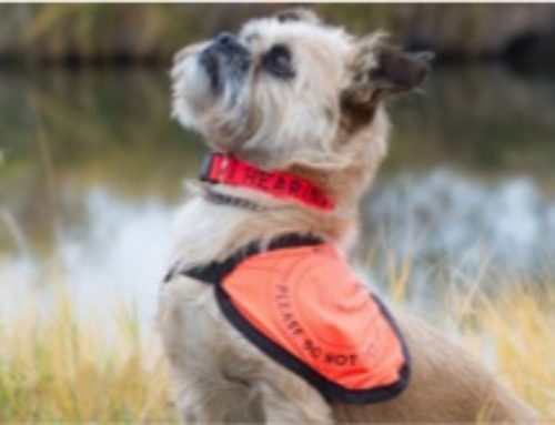 How a Hearing Dog Could Change Your Life