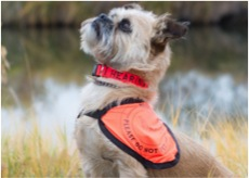 Peace of mind is one of the ways service dogs for hearing loss could change your life.