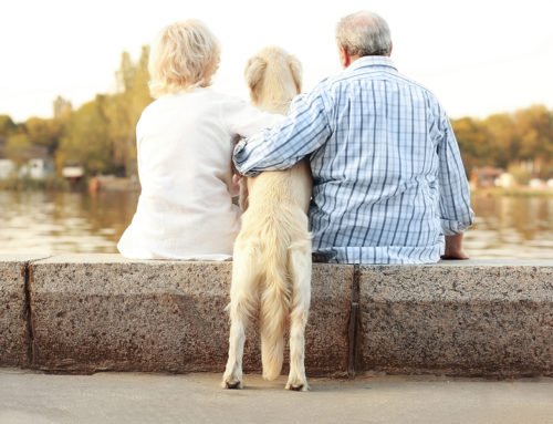 5 Health Benefits of Pets for Seniors