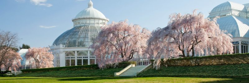 One of the most beautiful hearing loss-friendly gardens is the New York Botanical Gardens in Bronx, NY.