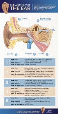 The anatomy of the ear includes the outer, middle, and inner ear.