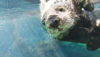 One of the hearing loss-friendly activities in Minneapolis is visiting the Minneapolis Zoo.