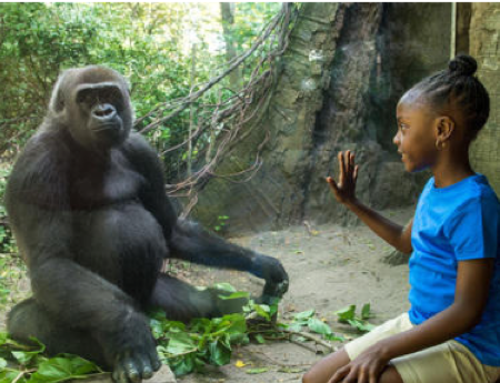 9 Hearing Loss-Friendly Zoos in the U.S.