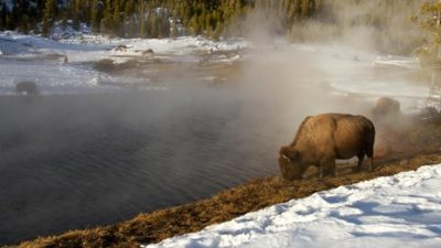 One of the hearing loss-friendly national parks on our list is Yellowstone National Park in Idaho, Montana and Wyoming