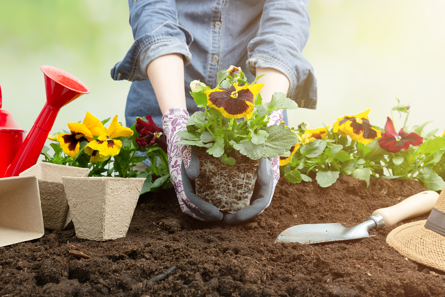 These tips on how to start a flower garden are inspired by Plant a Flower Day.