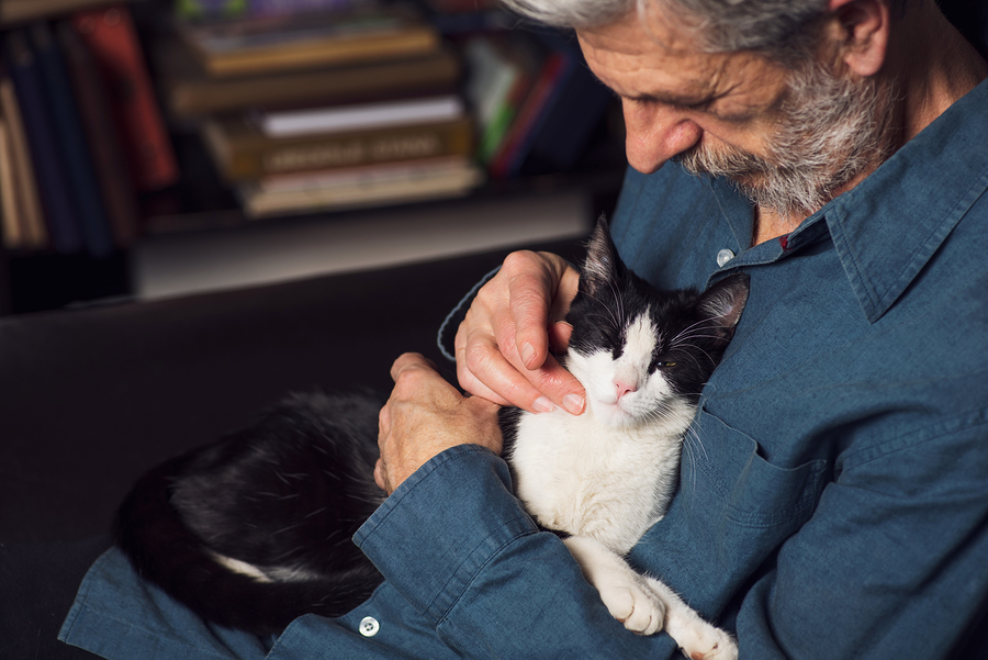 Some of the best pets for seniors include small dogs, cats, fish, and parakeets.