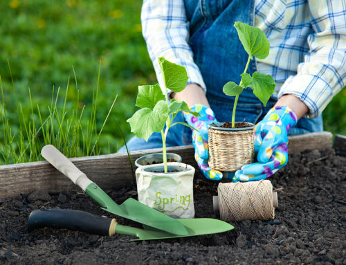 8 Gardening Tips for Beginners