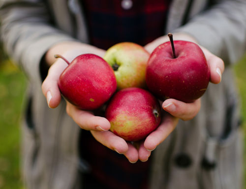 8 Healthy Apple Recipes to Enjoy this Fall